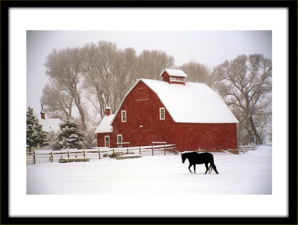 Black Horse and Barn by Michael Crabtree